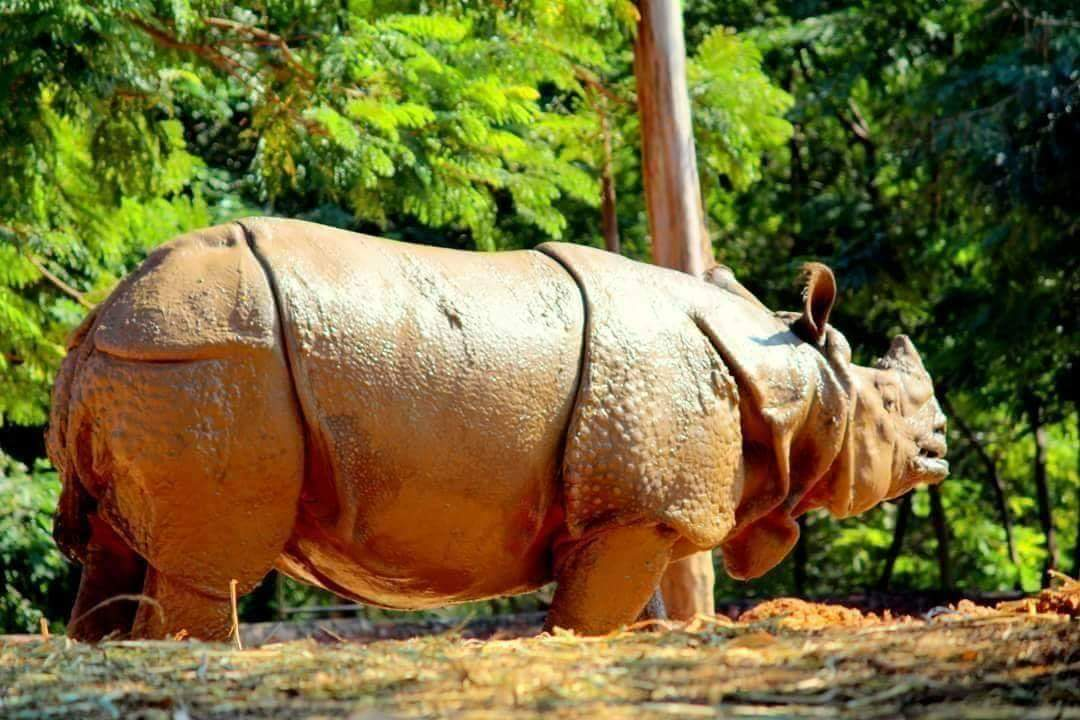 Vizag Zoo Park - Indira Gandhi Zoological Park Timings, Entry Ticket | Travel Guide
