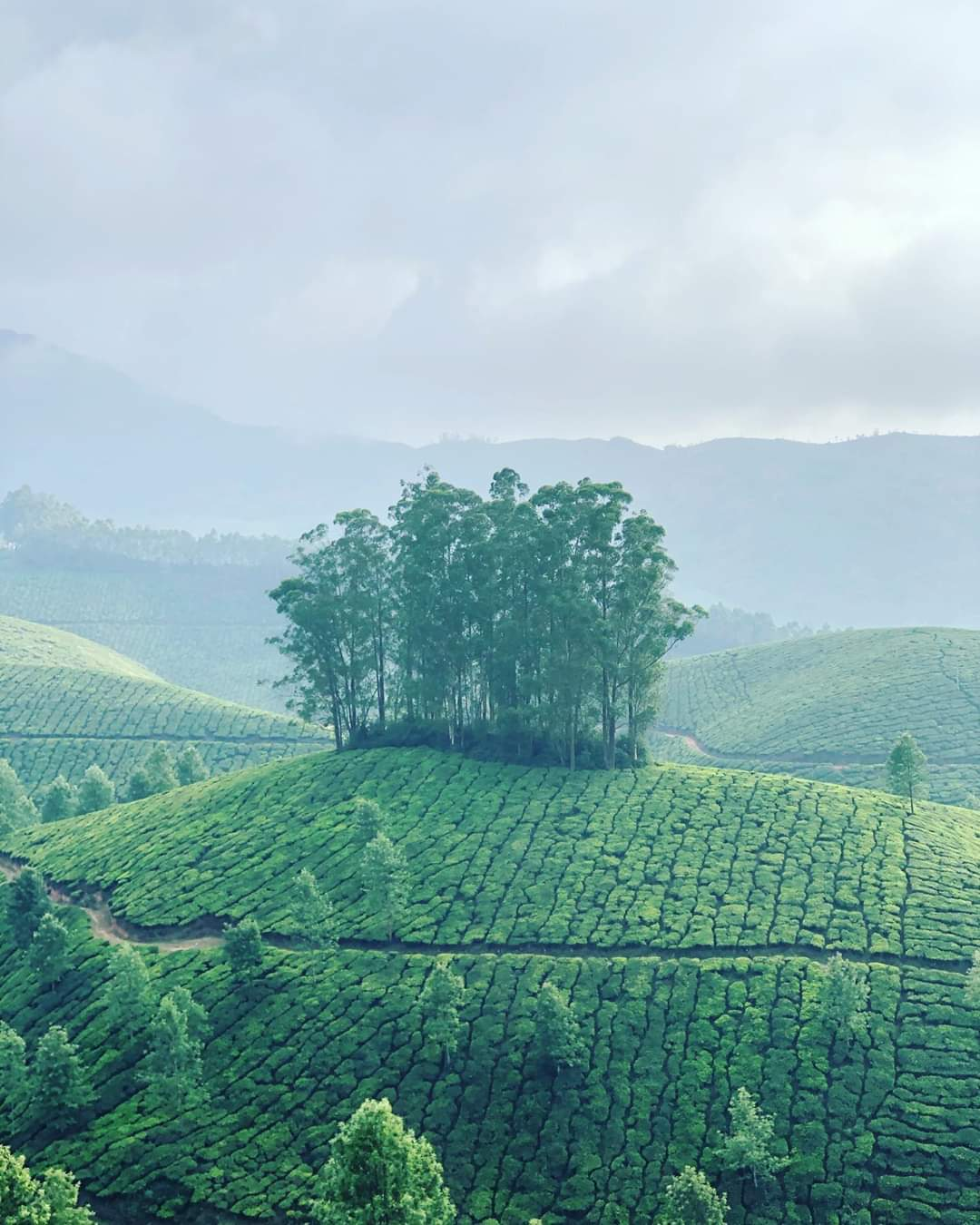 #Munnar #kerala - Beautiful Munnar Weather | Travel Guide