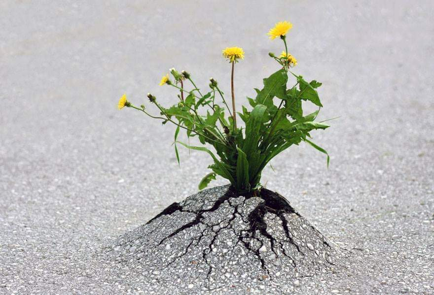 Life Always Finds A Way (100+ Pics)