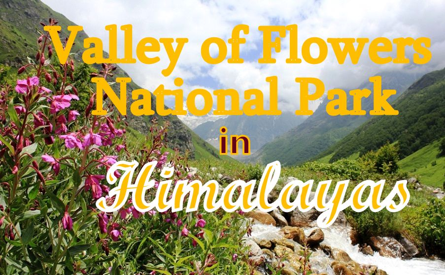 Valley of Flowers National Park in Himalayas, Uttarakhand